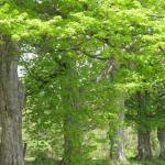 Borton woods