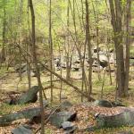 Hepler woods