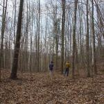 Payne's woods are a mix of oak, pine, hemlock, birch, maple, hickory, and other species.