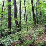 East Lake Waushacum forest