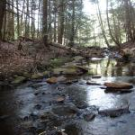 Camp Brook in McLennon Reservation
