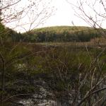 Hale Swamp