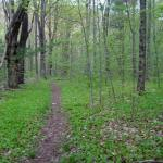 Hiking trail in McLennan Reservation
