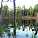 North Ridge Pond