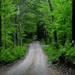 Upper Chestnut Hill Road