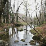 A view of Cole's Brook meandering through the forest.