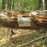 Hepler trails