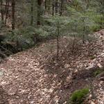 Hillside excavated by Walter Steven