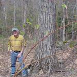 John Payne with an oak tree of high value on his land.