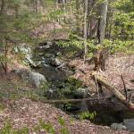 Nichols brook