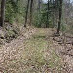 Payne's woods, and the adjacent leased property, have good access with a series of well-maintained woods.